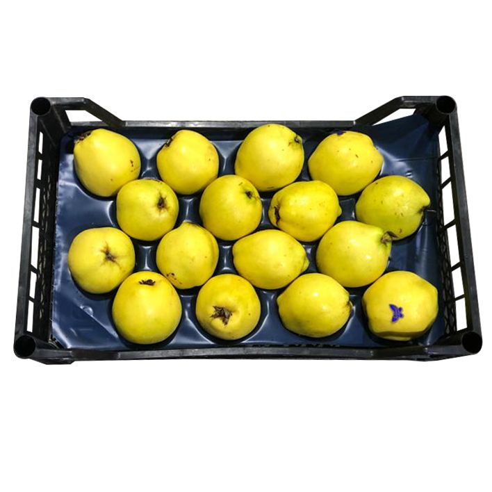Quince 3.5Kg - 3.7Kg (UAE Delivery Only)